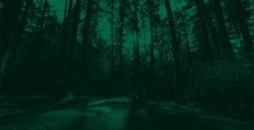 Trees in a forest